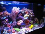 akuarium-air-laut_0806.jpg