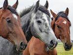 arti-mimpi-tentang-kuda.jpg