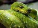 arti-mimpi-ular-07072021.jpg