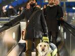 bikin-sedih-begini-perjuangan-anjing-pembimbing-membantu-pemiliknya-yang-difabel-melewati-stasiun_20180331_114035.jpg