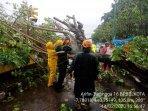 bpbd-kota-yogya-hujan-deras-sebabkan-pohon-tumbang-hingga-tutup-akses-jalan.jpg