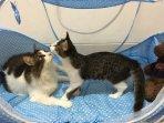 cat-lovers-harus-tahu-kapan-kucing-harus-vaksin-manfaat-dan-berapa-biayanya-2.jpg