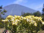 daftar-5-gunung-di-indonesia-ini-memiliki-padang-edelweis-yang-indah-jangan-dipetik.jpg