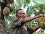 durian-pasrepan-pasuruan.jpg