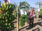 festival-pisangtampilkan-pisang-lokal-asli-bantul.jpg
