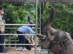 gl-zoo-terima-donasi-pakan-satwa-dari-pt-softex-indonesia.jpg