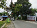 hadapi-cuaca-ekstrem-dlh-sleman-pantau-22-ribu-pohon-perindang-jalan.jpg