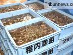 hendak-curi-teripang-seharga-2-juta-yen-tiga-anggota-yakuza-ditangkap-polisi-jepang_20180609_154034.jpg