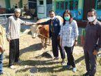 hewan-kurban-berupa-seekor-sapi-seberat-lebih-dari-600-kg-oleh-pt-mirota-ksm-yogyakarta.jpg