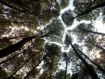 hutan-pinus_20151220_082606.jpg