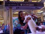 jcm-wadahi-pecinta-kuncing-lewat-remarkable-cat-exhibition_20180924_191706.jpg