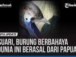 VIDEO: Kasuari, Burung Berbahaya di Dunia Ini Berasal dari Papua