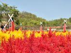 kebun-bunga-celosia-gunungkidul.jpg