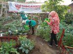 kebun-organik-milik-kelompok-wanita-tani-kwt-srikandi.jpg