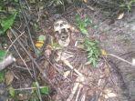 kerangka-manusia-ditemukan-di-lereng-bukit-kendel-di-gunung-merapi.jpg