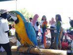 kompetisi-terbang-bebas-burung-paruh-bengkok-meriahkanhut-ke-1-jogja-parrot-diningrat.jpg