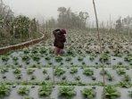 kondisi-pertanian-para-warga-desa-sengi-jumat-20082021.jpg