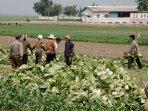 krisis-pangan-di-korea-utara.jpg