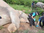 kronologi-gajah-mati-tersengat-listrik-di-perkebunan-mangga-di-thailand-belalainya-alami-luka-bakar.jpg