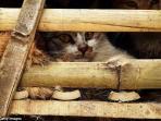 kucing5.jpg