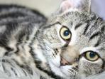 kucing_3001.jpg