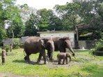 melihat-bledug-bayi-gajah-koleksi-gl-zoo-hibur-netizen-di-masa-pandemi-covid-19.jpg