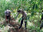 pamit-cari-rumput-seorang-kakek-di-rongkop-ditemukan-tewas-di-ladang.jpg