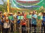 panen-perdana-petani-di-playen-hasilkan-107-ton-jagung-pupil.jpg