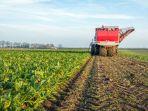 panen-sayuran-lobak-di-sebuah-lahan-pertanian-di-belanda_20180301_124820.jpg