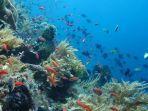 panorama-bawah-laut-di-desa-wisata-pemuteran-buleleng-bali.jpg