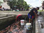 pasar-ikan-rewulu_20161231_203336.jpg