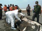 pembedahan-perut-hiu-paus-yang-terdampar-di-pantai-congot-kulon-progo.jpg