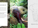 pembunuhan-gajah-bunta-gubernur-siapkan-hadiah-rp100-juta-bagi-warga-yang-temukan-pelaku_20180613_210611.jpg