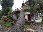 penampakan-pohon-tumbang-yang-menimpa-rumah-seorang-warga-di-desa-joho.jpg
