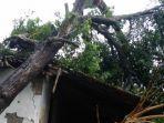 penampakan-pohon-tumbang-yang-menimpa-rumah-warga-di-klaten.jpg