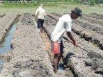 petani-di-kalurahan-srigading-mempersiapkan-lahan-untuk-ditanami.jpg