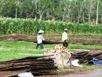petani-tembakau-magelang_20171008_120306.jpg
