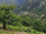pohon-ek-yang-tumbuh-di-taman-nasional-aspromonte-di-italia-selatan-berusia-hampir-1000-tahun.jpg