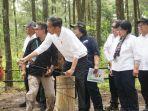 presiden-joko-widodo-melepas-liar-sepasang-elang-jawa-di-kawasan-taman-nasional-gunung-merapi.jpg