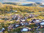 ratusan-rusa-yang-tewas-tersambar-petir-di-norwegia_20180827_112504.jpg