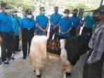 ratusan-sapi-po-dan-kambing-pe-di-kulon-progo-ikuti-kontes-ternak.jpg