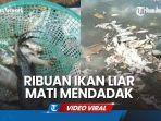 ribuan-ikan-liar-beragam-jenis-di-kali-dengkeng-anak-sungai-bengawan-solo.jpg