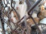 sadis-ratusan-kucing-direbus-hidup-hidup-kulitnya-diambil-untuk-dibuat-jaket-dan-akesori-lain33.jpg