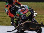 seekor-kanguru-melintas-di-depan-andrea-iannone-di-motogp-australia.jpg