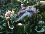 senin-pagi-suhu-dataran-tinggi-dieng-minus-11-derajat-celcius-terendah-dibanding-bulan-sebelumnya.jpg