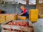 seorang-pegawai-tengah-menyortir-telur-ayam-di-gunungkidul-daerah-istimesa-yogyakarta.jpg