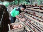 sepekan-terakhir-harga-telur-ayam-ras-di-kulon-progo-mengalami-penurunan.jpg