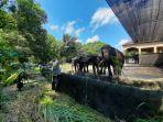 suasana-wahana-gajah-di-gl-zoo-yogyakarta-saat-penutupan-yang-kembali-diperpanjang.jpg