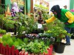 tampilan-kebun-sayur-indoor-milik-kelompok-tani-kemuning-pringgokusuman.jpg