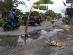 tanam-pohon-pisang-di-jalan.jpg